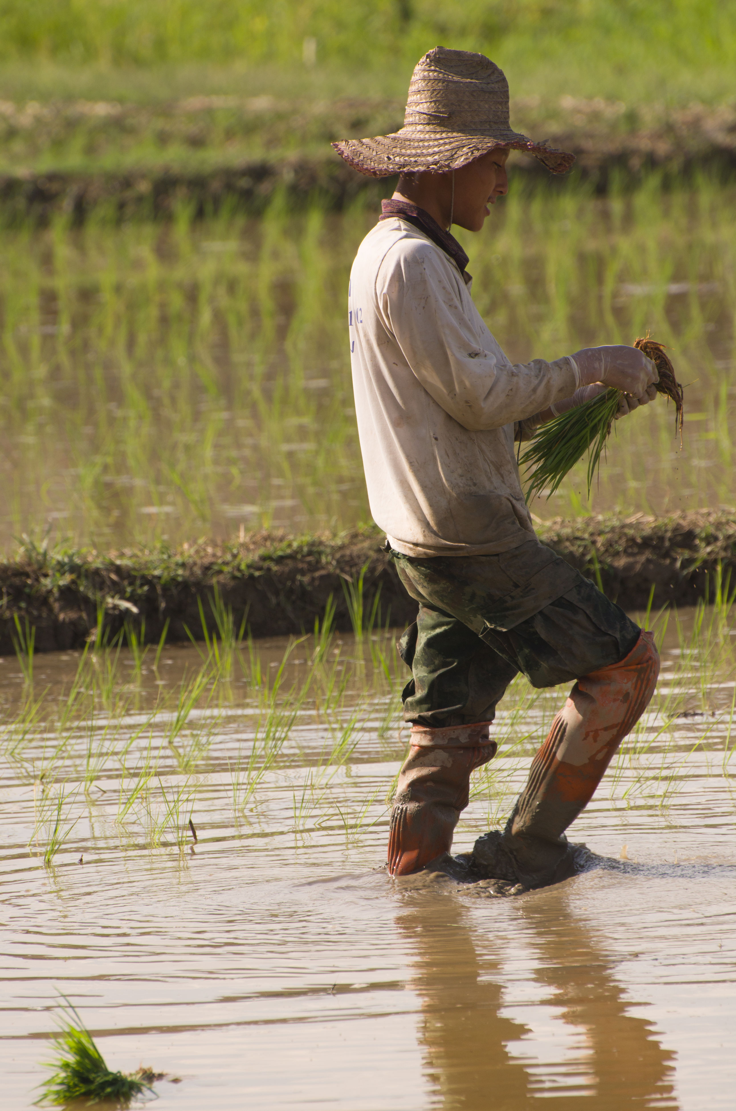 water, hat, real people, full length, outdoors, one person, nature, lake, day, asian style conical hat, men, rear view, tranquility, lifestyles, farmer, women, occupation, beauty in nature, rice paddy, working