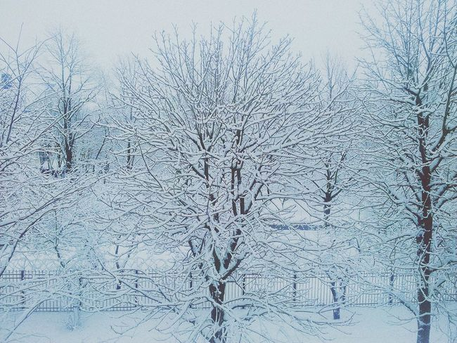 Cold Winter ❄⛄ Snow ❄ Winter Trees