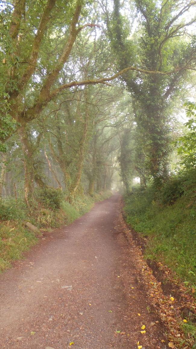 Camino CaminodeSantiago El Camino Jakobsweg Pilgern Pilgrimage Road Track Way Way Of Saint James Weg Fog Foggy Nebelig Nebel
