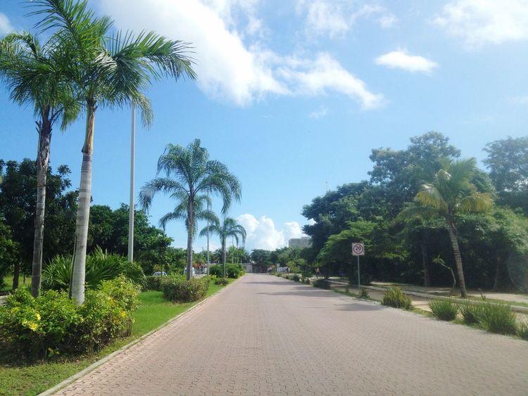 Palm Trees Playadelcarmen GreatDay!(: