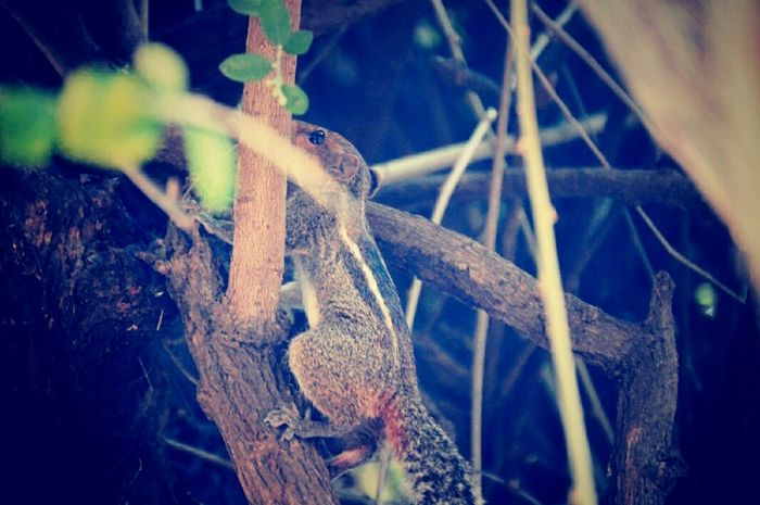 Squirrel Trying To Hide! Cute♡