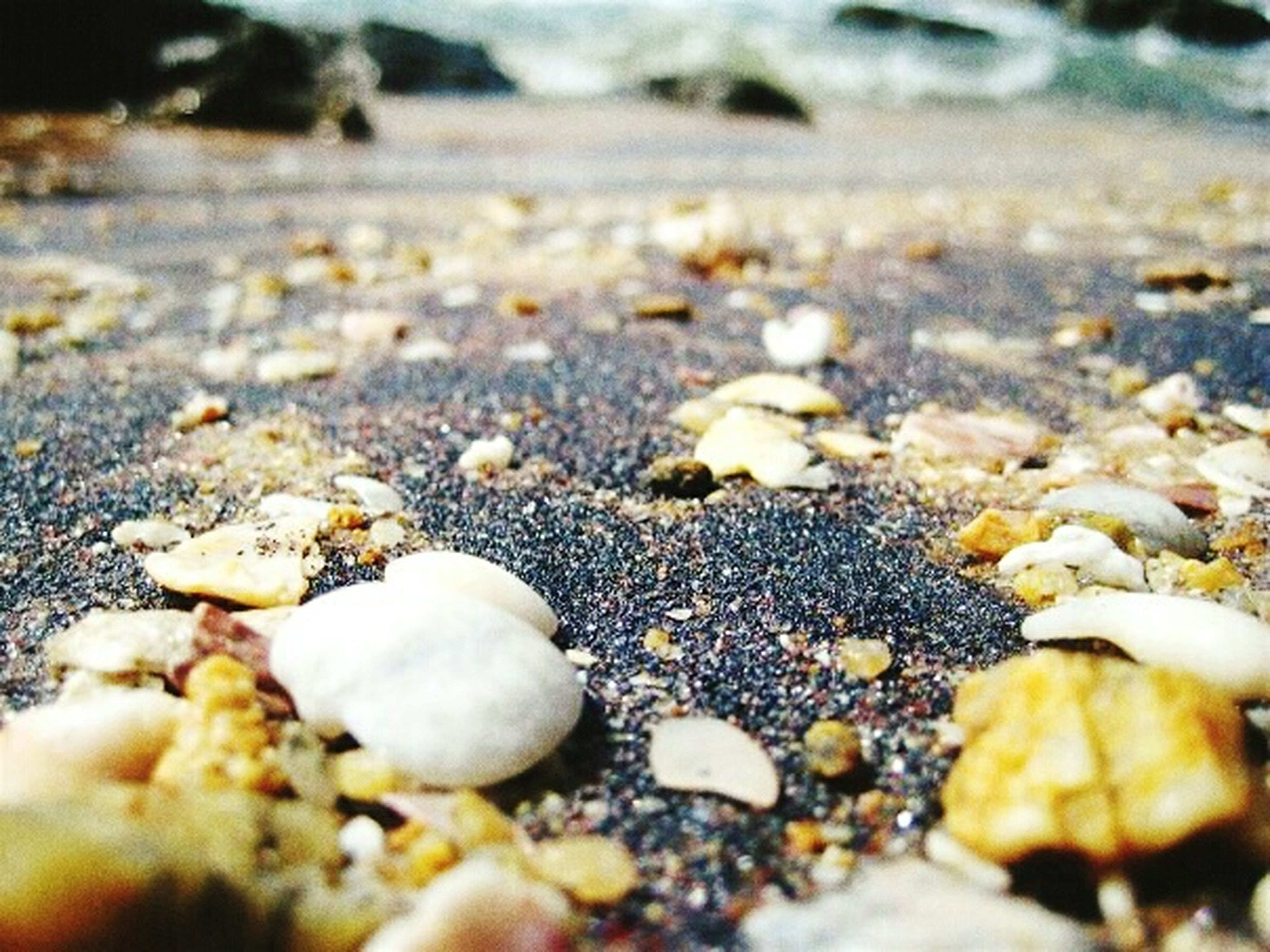beach, selective focus, pebble, sand, surface level, nature, shore, stone - object, tranquility, stone, close-up, seashell, focus on foreground, rock - object, outdoors, day, no people, beauty in nature, water, shell