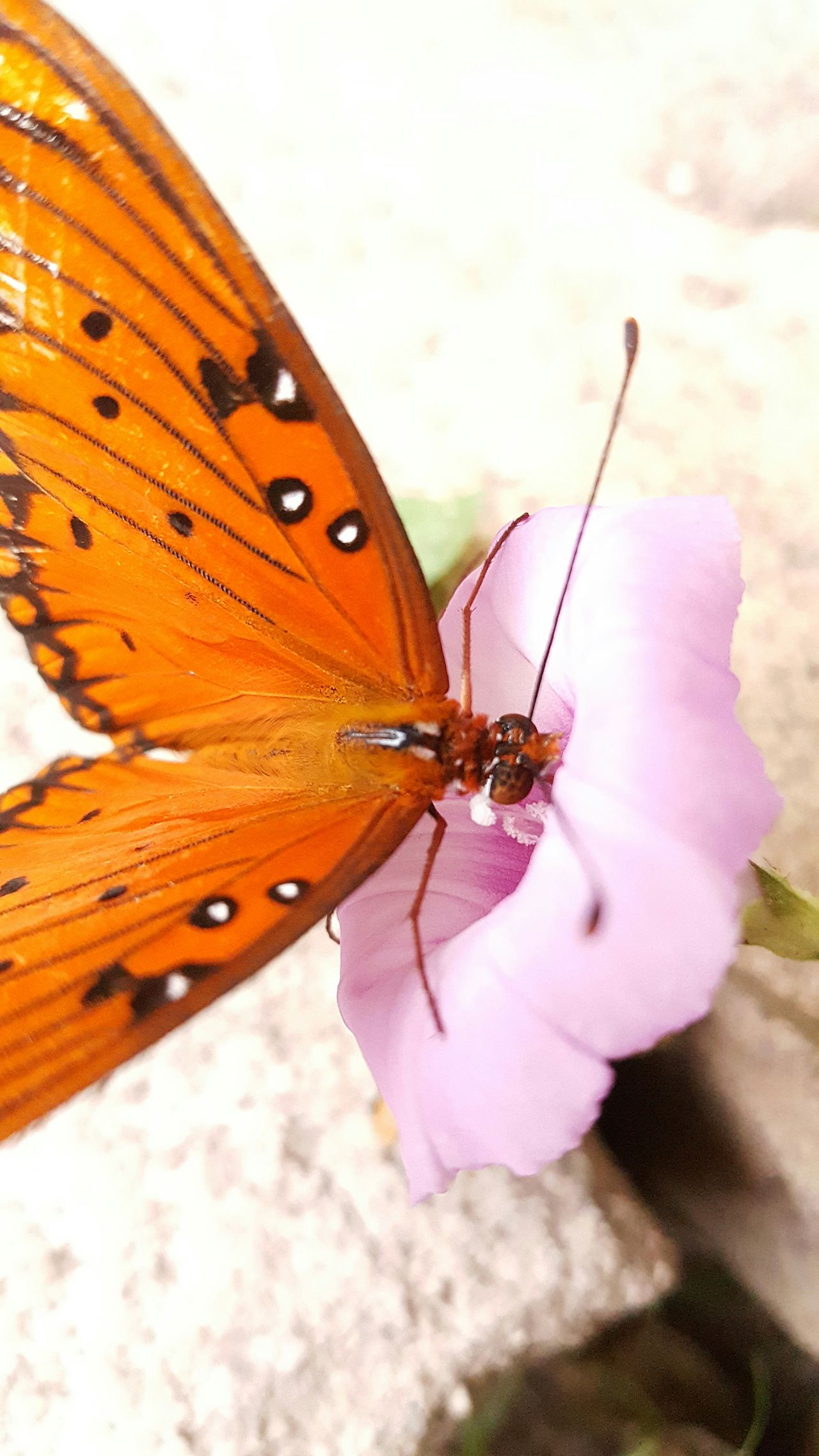 One Animal Insect Animal Themes Wildlife Animals In The Wild Butterfly Butterfly - Insect Close-up Perching Animal Antenna Animal Wing Moth Focus On Foreground Nature Extreme Close-up Brown Animal Markings Beauty In Nature Day Outdoors