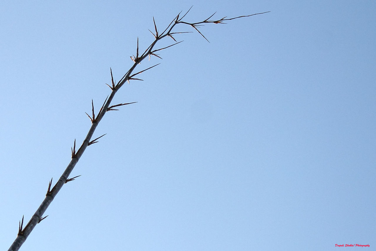 blue, clear sky, low angle view, day, copy space, no people, nature, outdoors, branch, beauty in nature, tree, sky
