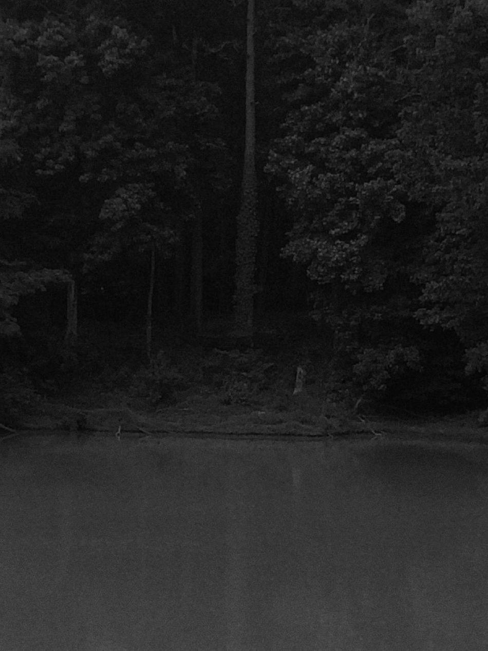 Louisiana Swamp Bayous Of Louisianna Nature Photography Natures Diversities