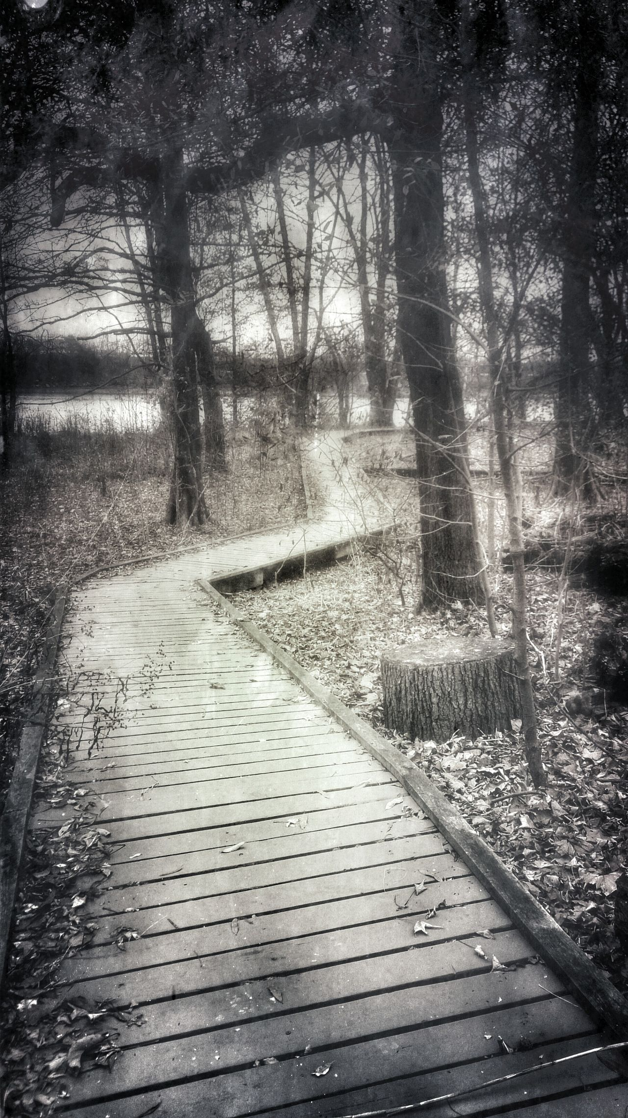 Uncertain Journey...my path seems cloudy only lit by the reflection of moon against the mist. The path looks crooked but harmless, and yet I been on paths straighter then a needle and danger abound everywhere. Me thinks I will take the road less travel. EyeEm Nature Lover B/w Collection On The Path . Mist And Shadow