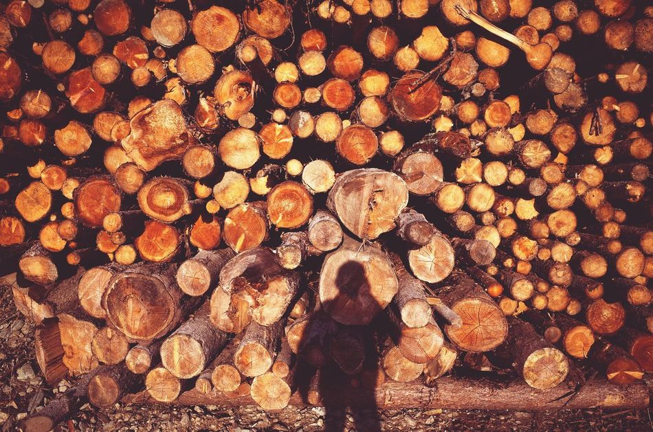 Timber Deforestation Lumber Industry Log Pattern Large Group Of Objects Full Frame Outdoors Miles Away Low Section Dolomites South Tyrol Südtirol Daily Business  Patterns Country Living Fallen Trees Industry Wood Industry The City Light