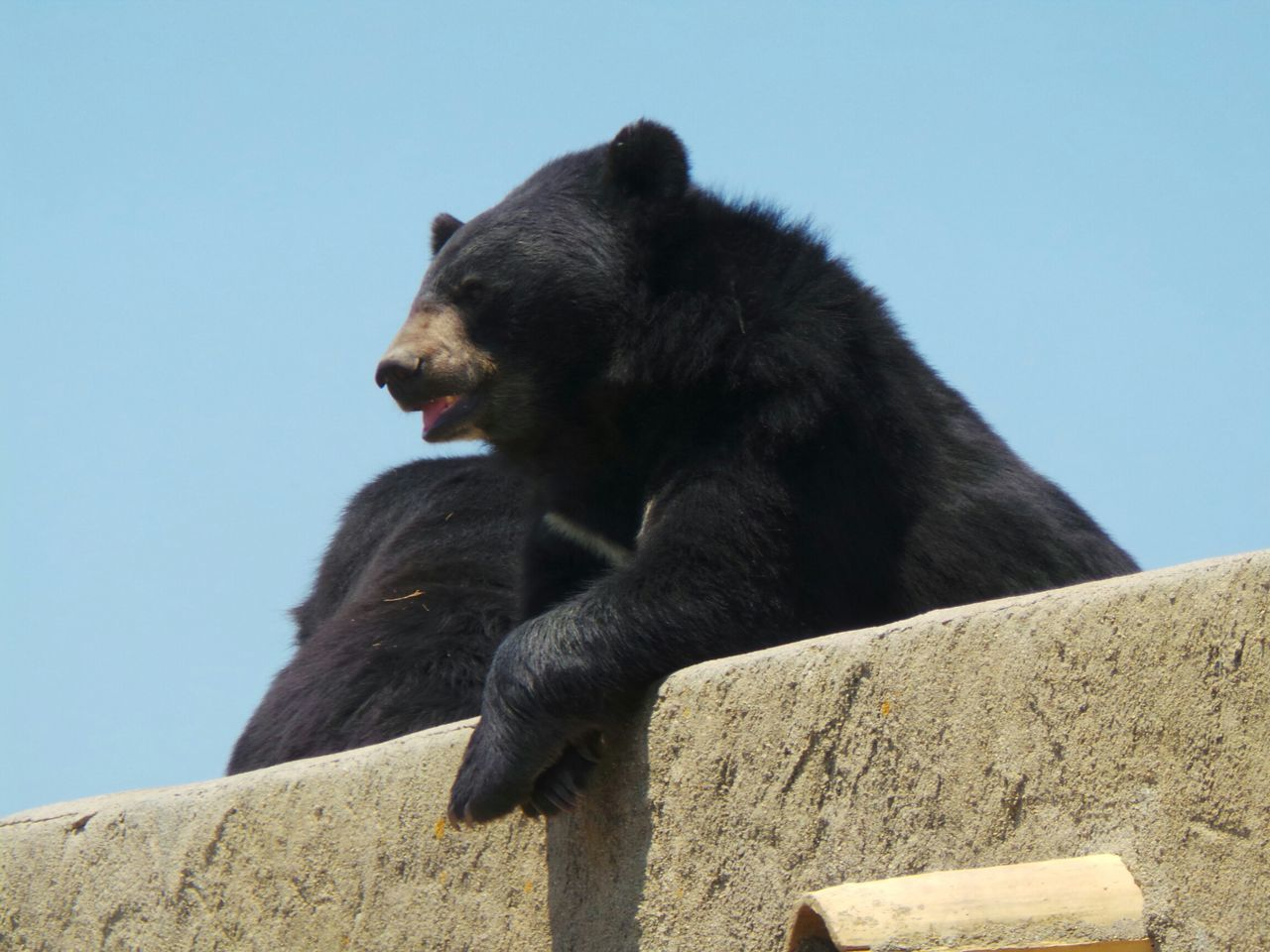 Beautiful stock photos of bear, Animal Themes, Animals In The Wild, Black Bear, Black Color