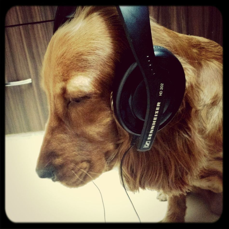 Technology I Can't Live Without Music Is Life 🎧Sennheiser Who Let The Dogs Out?