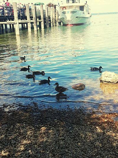 Water Sea Beach Nautical Vessel Sky Animal Themes Bird Ducks Nature Day Outdoors Boat Chiemsee Herreninsel Rippled Buoy No People