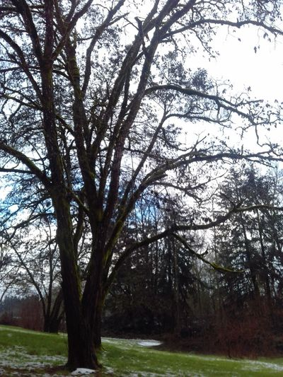 Tree Sky No People Beauty In Nature Winter Time Cold Temperature Snow Branch Trees