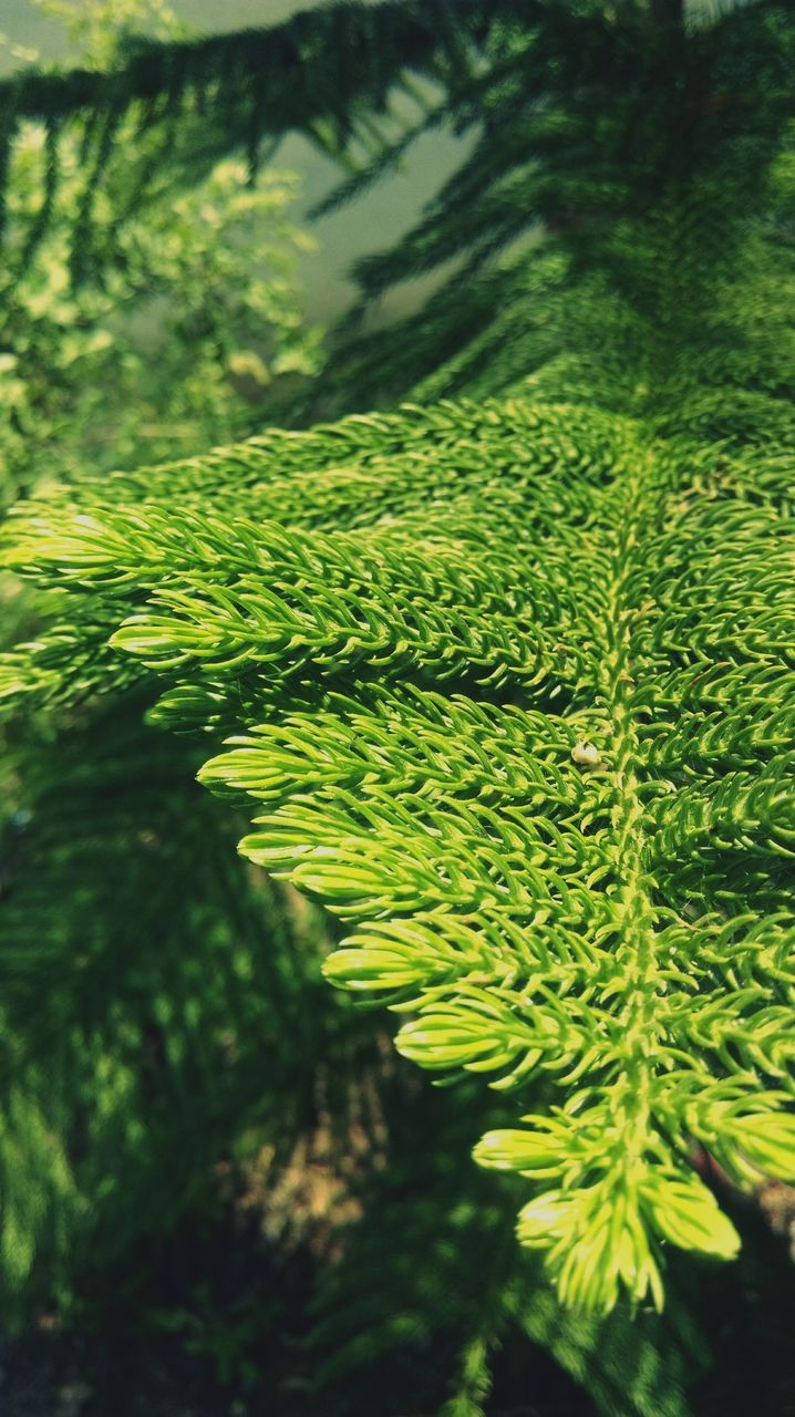 growth, nature, green color, beauty in nature, green, fern, leaf, plant, day, tranquility, outdoors, no people, close-up, lily pad, forest, freshness
