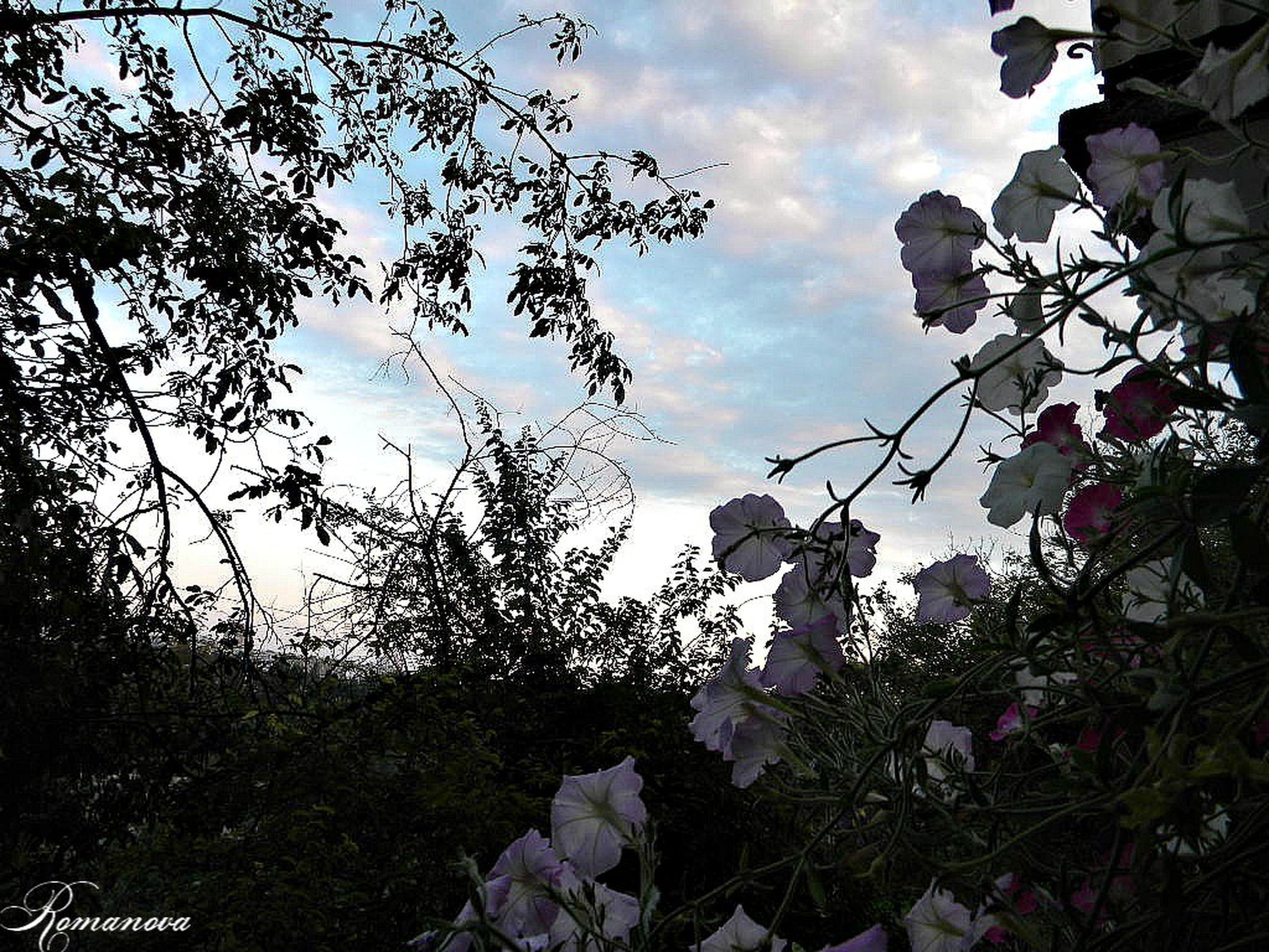 sky, tree, branch, cloud - sky, low angle view, growth, nature, cloud, tranquility, beauty in nature, leaf, cloudy, tranquil scene, scenics, outdoors, day, bare tree, no people, plant, flower