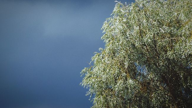 Sweden Swedish Nature Solna Showcase July