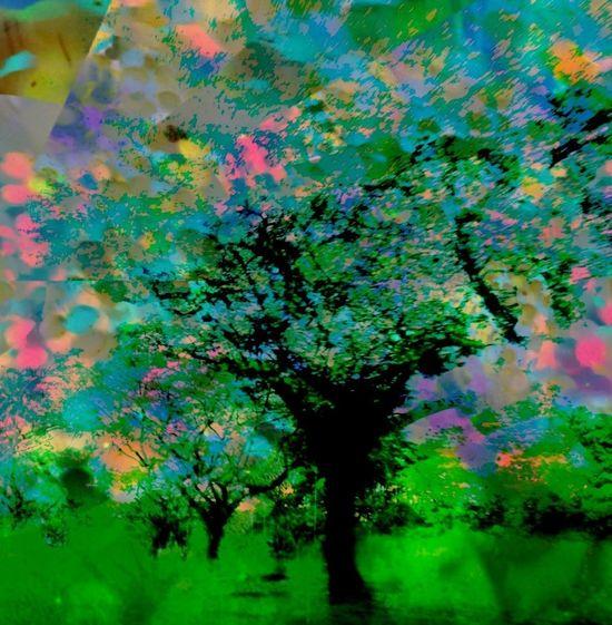 ColorBlasTreeing TreePorn Fantasy Edits Contemporaryart Icolorama