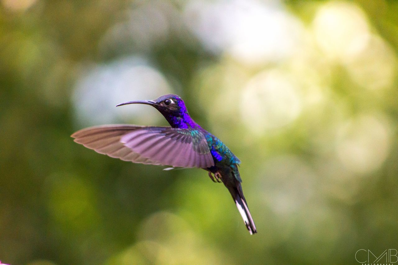 📷 Nature Bird Honduras Instagood Photography Photo Photooftheday EyeEmNewHere