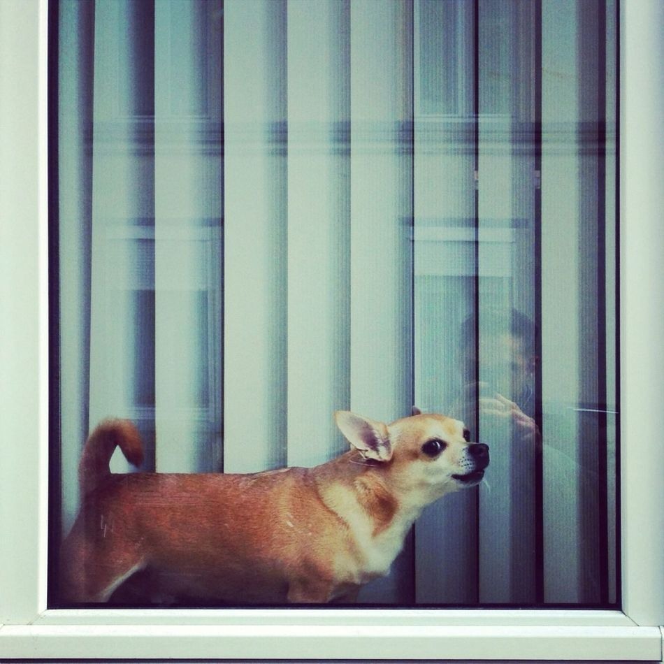 Beautiful stock photos of mobile, Animal Themes, Blinds, Brown, Camera Phone