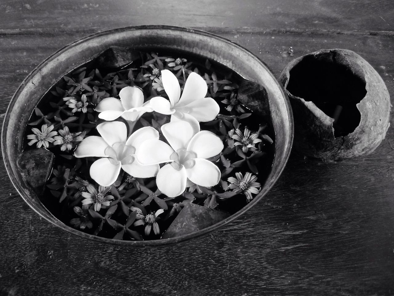 Flowers Flower Flowerporn Flower Collection Bowl Black&white Black And White EyeEm Black&white! Black & White Blackandwhite Blackandwhite Photography Beautiful Relaxing ASIA Asian Culture Asianstyle