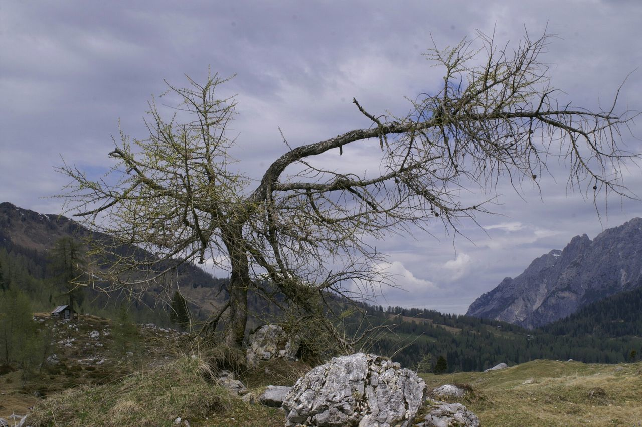 Tree Mountain Wind Sauris