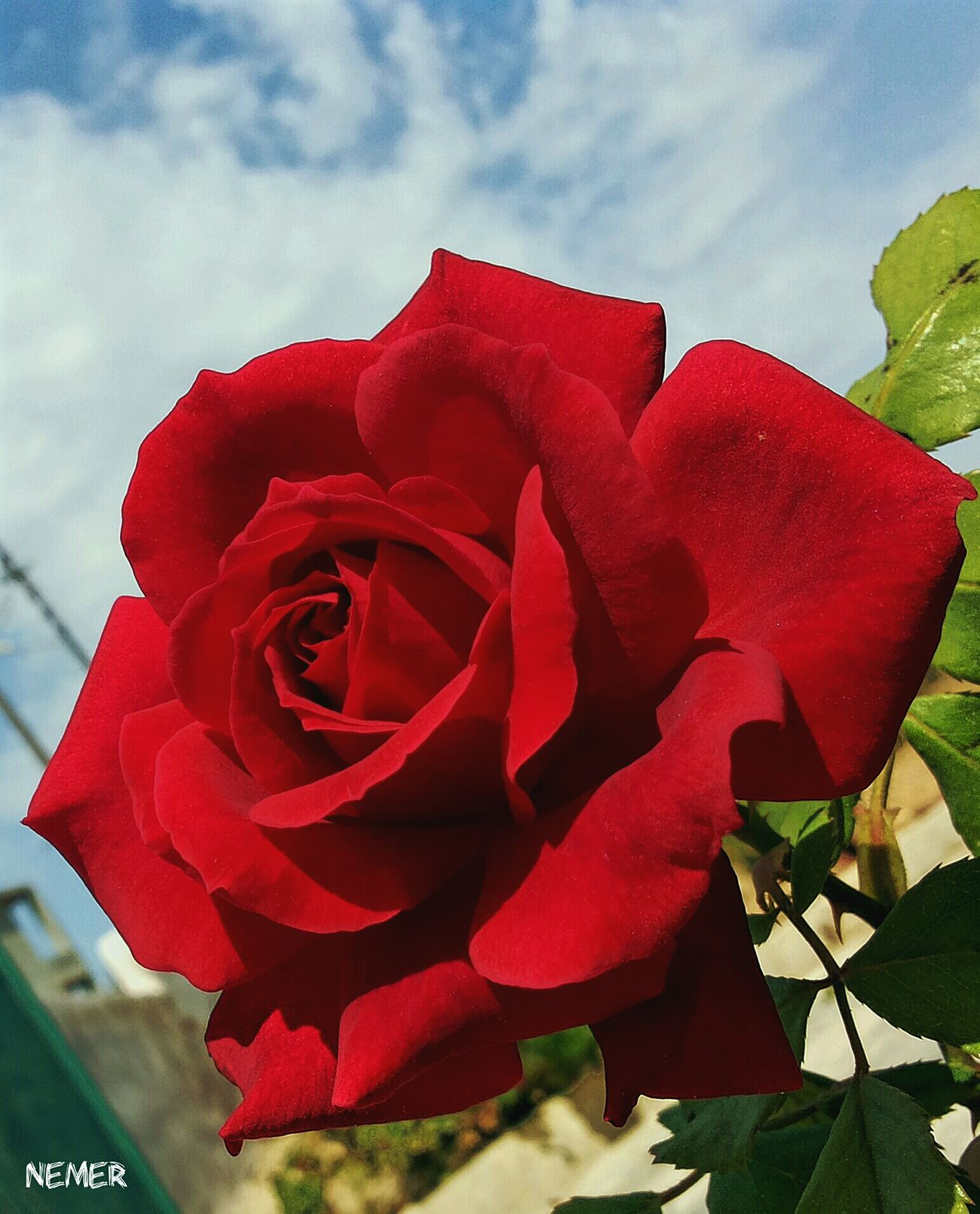 Jordan Amman Sunrise Light And Shadow Beautiful First Eyeem Photo Red Eyem Nature Sky Spring Flowers,Plants & Garden Green Nature Flower Spring Flowers Red Roses Love ♥ Rose🌹 Roses Love