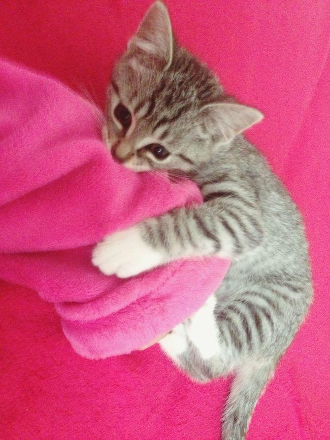Misha 💕😽 Cat Lovers Babygirl BabyPet