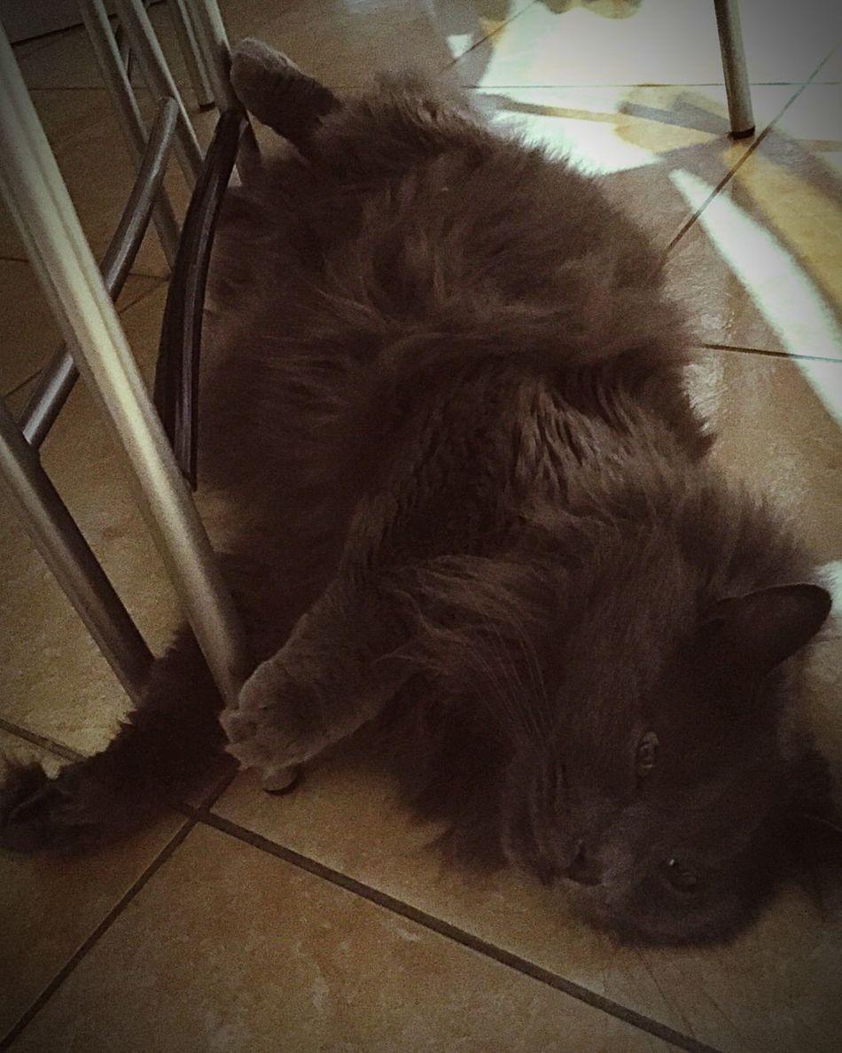 Felinos Cat Cat Lovers Cats Cat♡ Gatto😸 Gatto Felino Zufolo