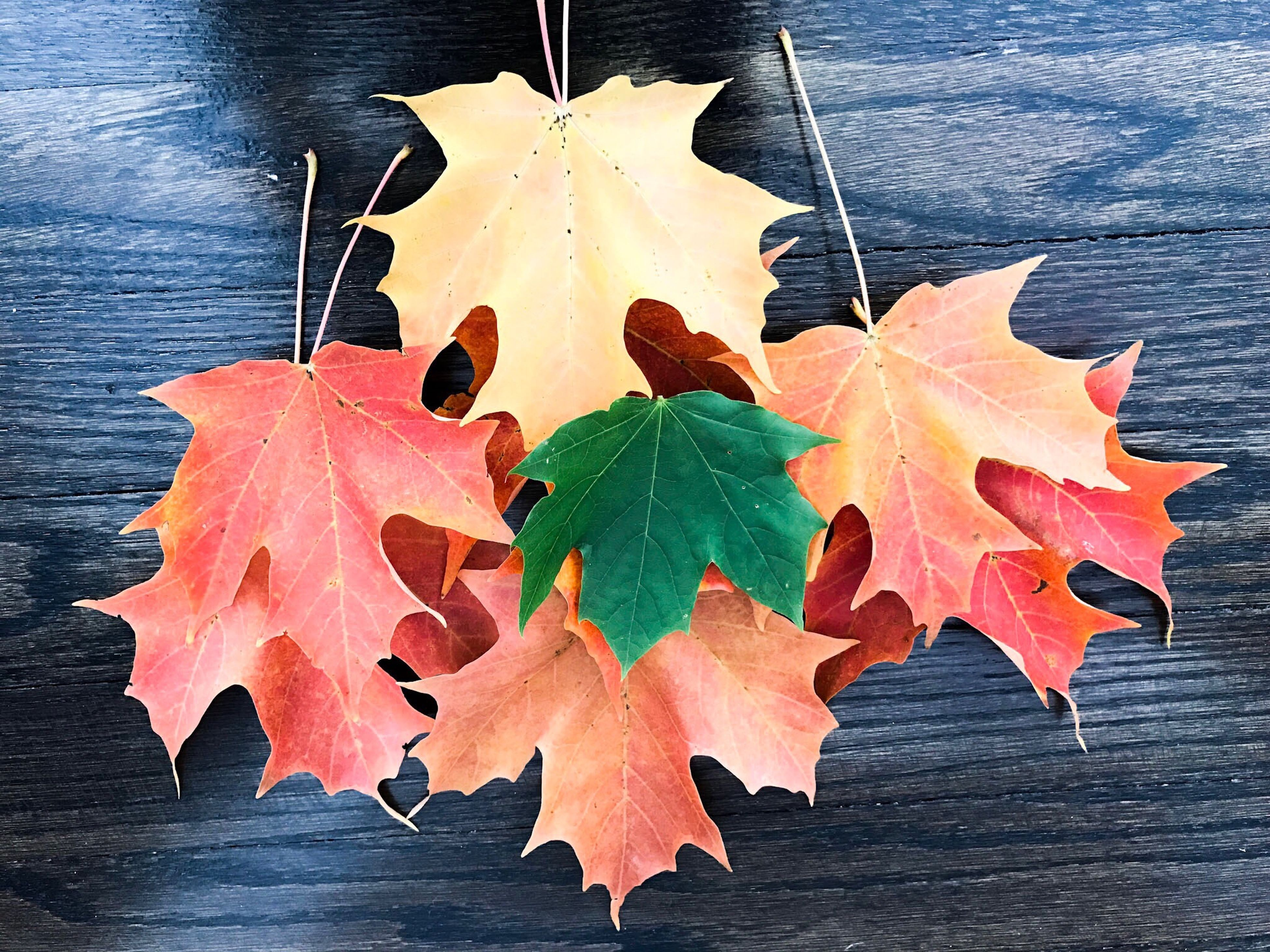 leaf, change, autumn, maple leaf, nature, yellow, close-up, no people, beauty in nature, maple, freshness, outdoors, day