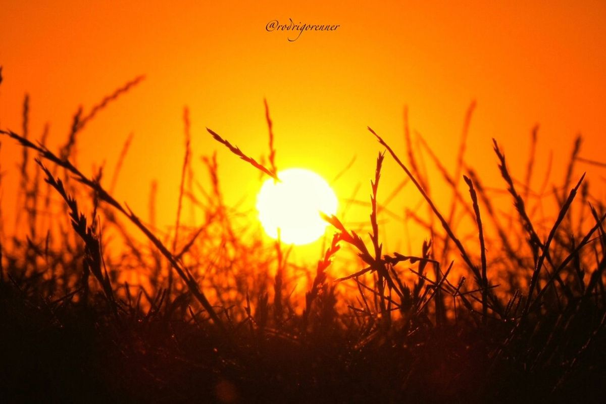 My sunset (view from the grass). My EyeEm still don't let me post photos with high definition. And my comments and likes sometimes disappear... Good night my dear friends ! by Rod