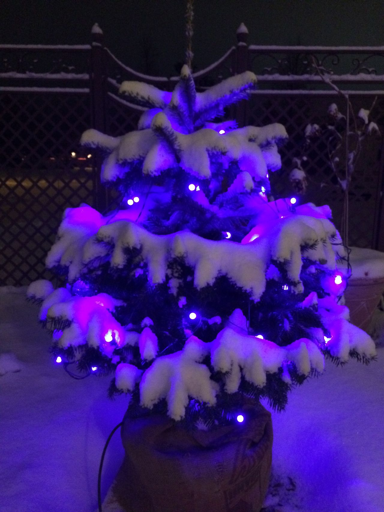 Illuminated Night Celebration Christmas Lights Christmas Tree Live Christmas Tree Winter Tree No People Light And Shadow Cold Temperature Snow Snow ❄ Beauty In Nature Nature On Your Doorstep Kris Tabor