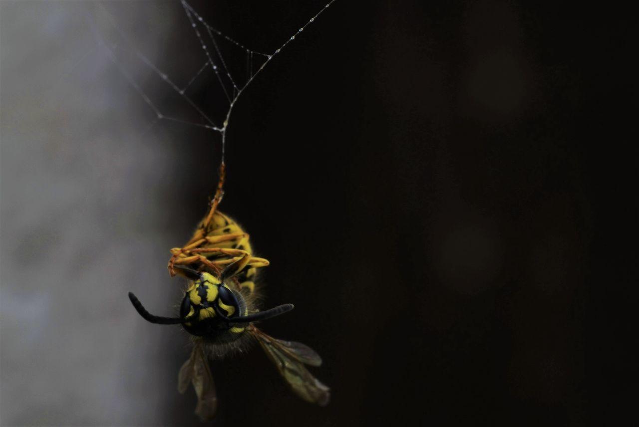 Beautiful stock photos of spinnen, Animal Antenna, Animal Themes, Animal Wildlife, Animals In The Wild