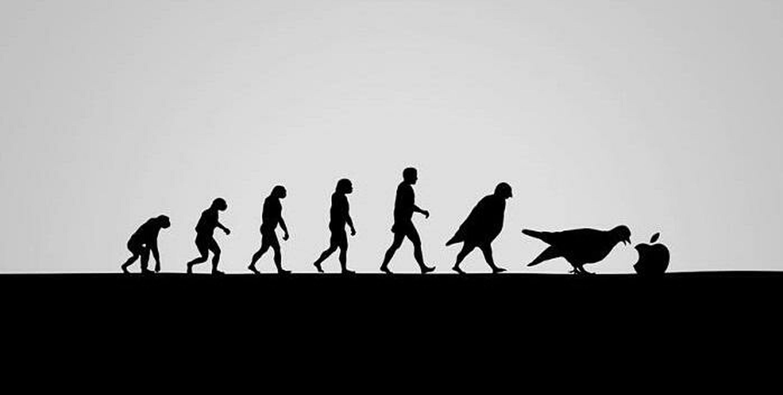 silhouette, togetherness, men, clear sky, copy space, animal themes, full length, walking, low angle view, lifestyles, bird, person, leisure activity, standing, outline, outdoors, medium group of people, wildlife, sky