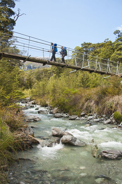 Somewhere on the Routeburn Track Beauty In Nature Bridge - Man Made Structure Clear Sky Hike Hiking Leisure Activity Lifestyles Nature New Zealand Outdoors River Routeburn Track The Following Tree Water