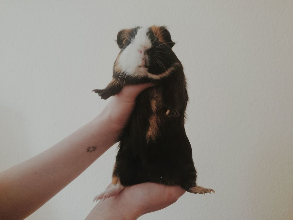 Beautiful stock photos of hamster, Animal Themes, Berlin, Copy Space, Cropped