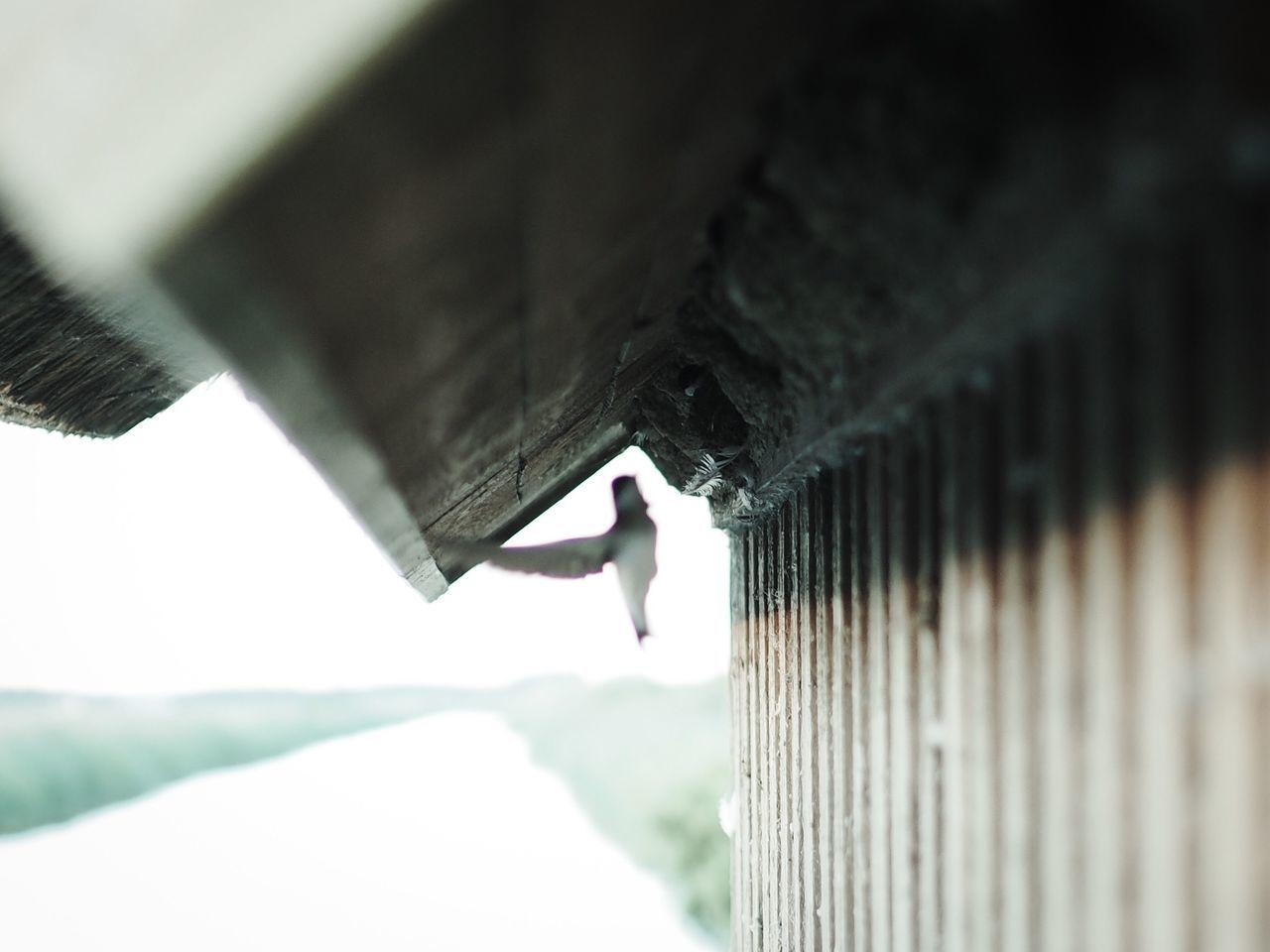 Swallow Bird Birds Nest Bygholm Vejle M.Zuiko 45mm 1:1,8
