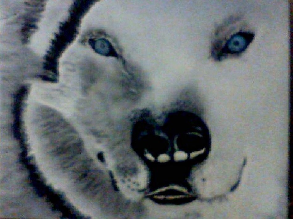 An airbrush painting I done. Airbrush Airbrushed Airbrushed Painting Painting Wolf White Wolf