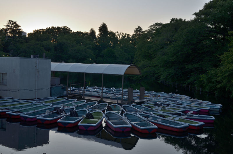 Inokashira Pond boat landing before sunrise Abundance Beauty In Nature Boat Dawn Day Group Of Objects Growth Idyllic Inokashira Park Nature No People Outdoors Pond Reflection Rental Boat Scenics Side By Side Silence Sky The Great Outdoors - 2016 EyeEm Awards Tranquil Scene Tranquility Tree Water