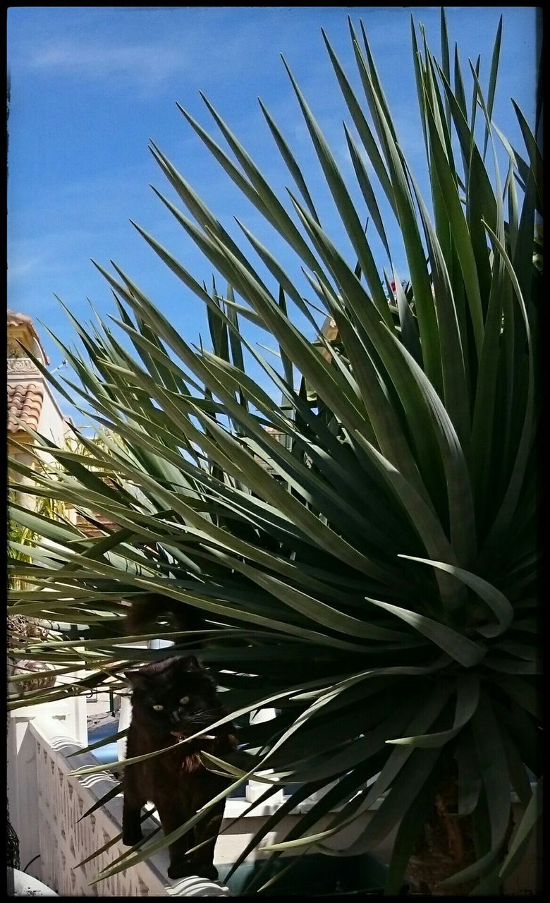 growth, nature, palm tree, day, outdoors, no people, beauty in nature, plant, green color, tranquility, leaf, tree, close-up, sky, freshness