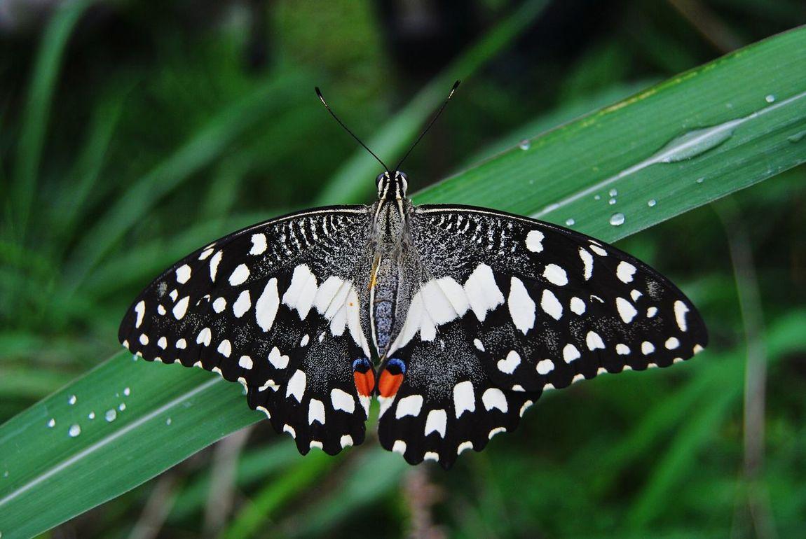 Lalbaghgarden Macro Photography Eyeembutterfly Butterfly Butterflies Bangalore Yps YPS Bengaluru