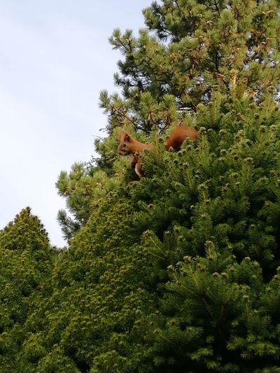 Besuch Eichhörnchen Squirrel Frühling Natur