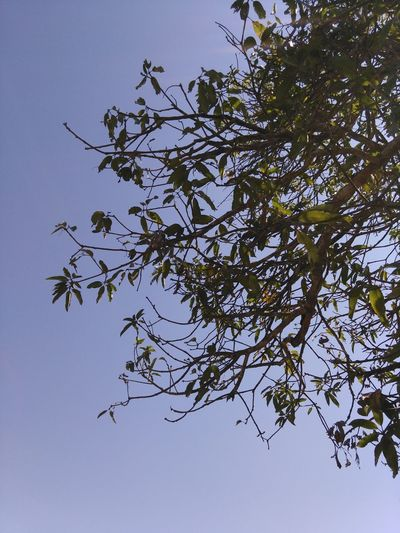 Tree Branch Low Angle View Nature No People Sky Clear Sky Outdoors Beauty In Nature Close-up Day