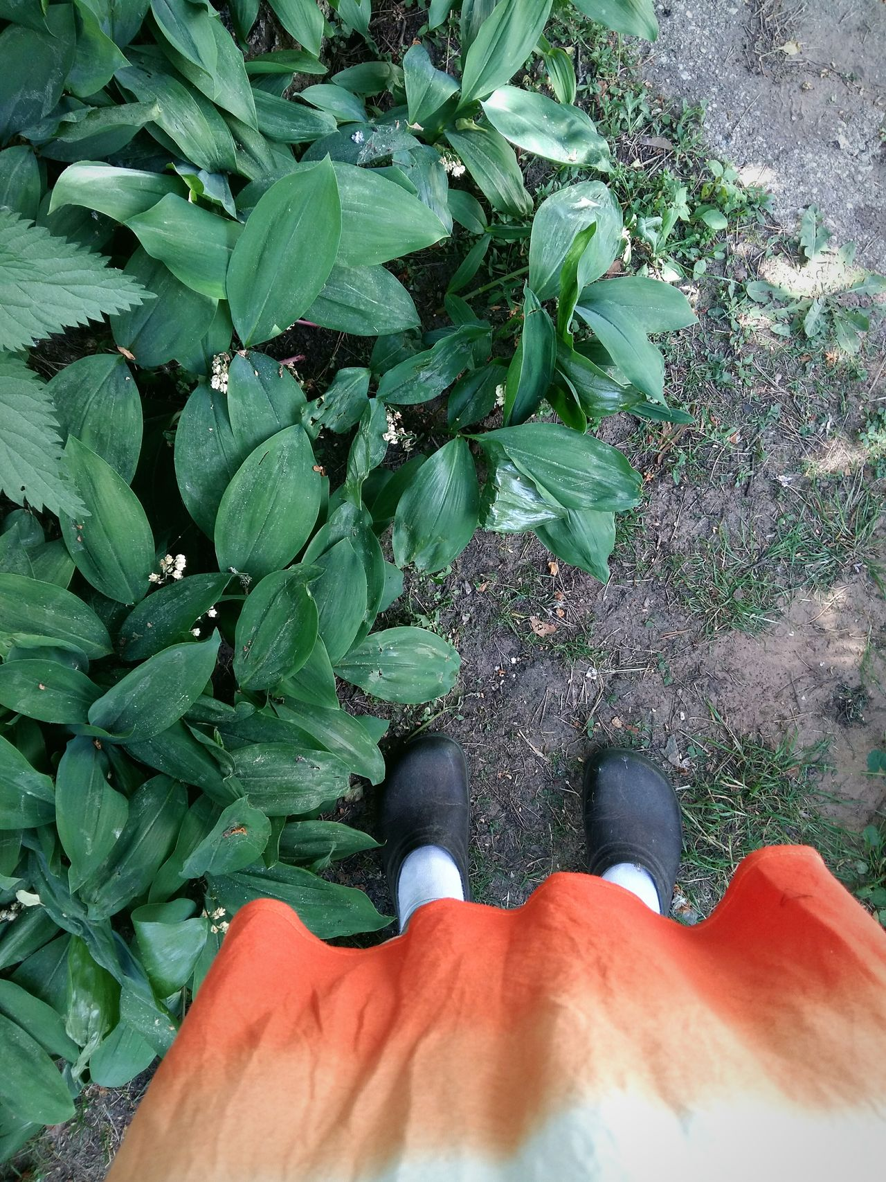 Low Section Real People Green Color One Person High Angle View Growth Leaf Lifestyles Human Leg Outdoors Nature Close-up Day Freshness Beauty In Nature Human Body Part Adult Garden Shoes Foot Selfie Flat Lays Gardening Spring Women Around The World EyeEmNewHere