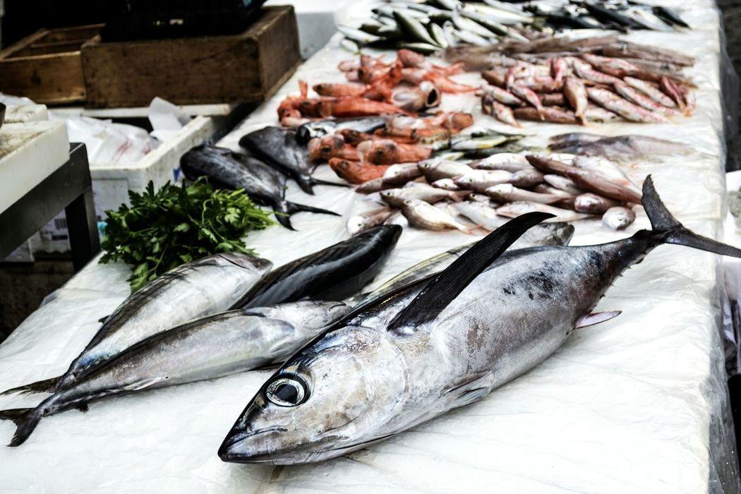 Fish Fishes Fish Market Catania Catania, Sicily Sicily Italy Sicilia Italia Jelly Fishes Market Mercato Del Pesce Pesci Traditional Italy❤️ Italy🇮🇹