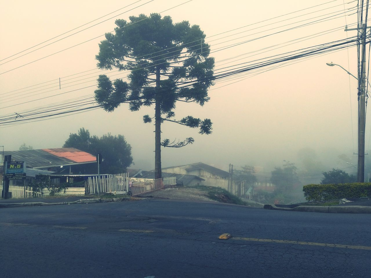 Tree Fog Business Finance And Industry Outdoors No People Sky Day Water Building Exterior Architecture City Nature Araucaria Neblina