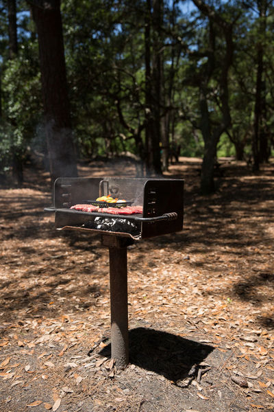 Absence Day Empty Focus On Foreground Forest G Grilling Out Grilling Outside Growth Information Sign Landscape Nature No People Non-urban Scene Outdoors Tranquil Scene Tranquility Tree Tree Trunk WoodLand