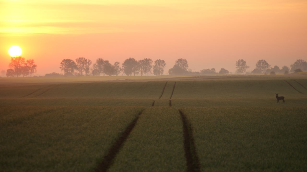 Agriculture Animal Themes Beauty In Nature Dawn Field Landscape Morning Nature No People Outdoors Poland Roe Deer Rural Scene Scenics Sunlight Tranquil Scene The Great Outdoors - 2017 EyeEm Awards