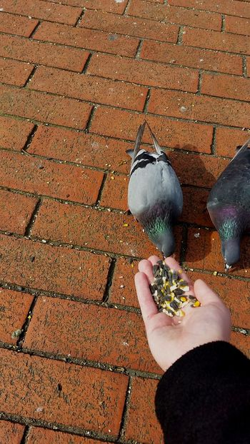 One of my favorite activities to do is to feed the pigeons. Their feathers are vibrantly colorful. Birds City Comfortable Outdoors Citylife Composition Simple Showcase: February Pidgeons Daily Life