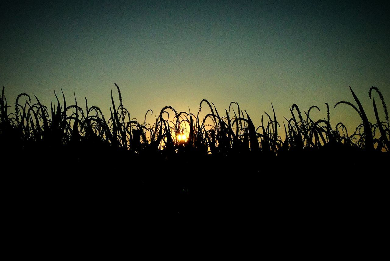 Silhouette Plants Growing On Field Against Clear Sky During Sunset