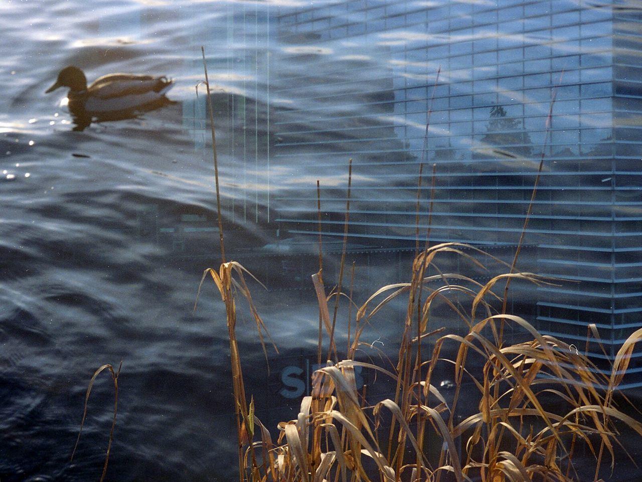Film Swap: Bankers Dream About Ducks, too. Film Swap 35mm Film Multiexposure  Lithuania Norway Skycraper Duck Analogue Photography Surreal