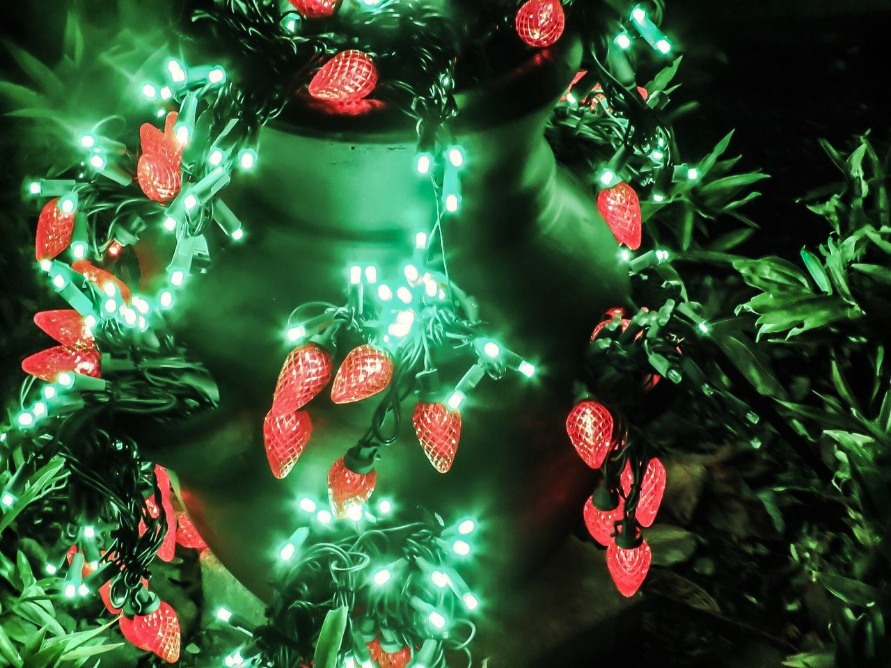 Can't get enough of these strawberry lights 😁 Green Color Celebration Illuminated Outdoors Bellevue Botanical Gardens Bellevue Phoyography Canonphotography Canon First Eyeem Photo