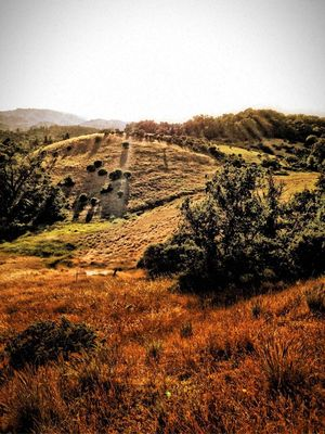 EyeEm Nature Lover at Healdsburg Ridge Open Space Preserve by Laura O'Hanesian